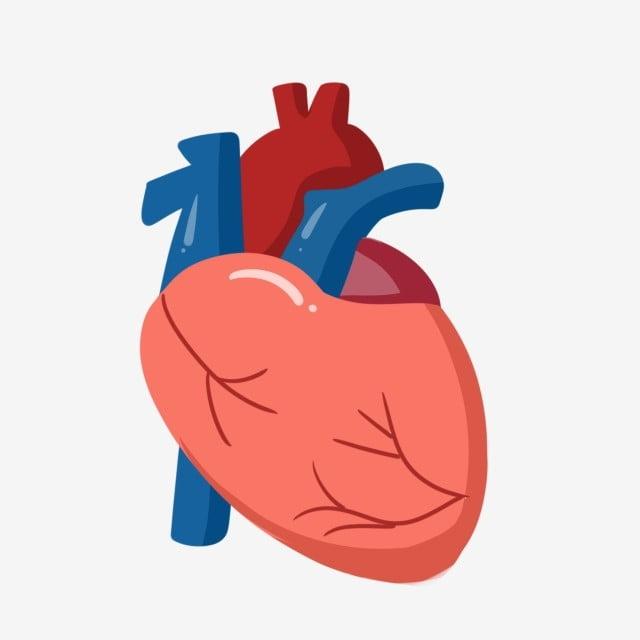 corazon dibujo esquema